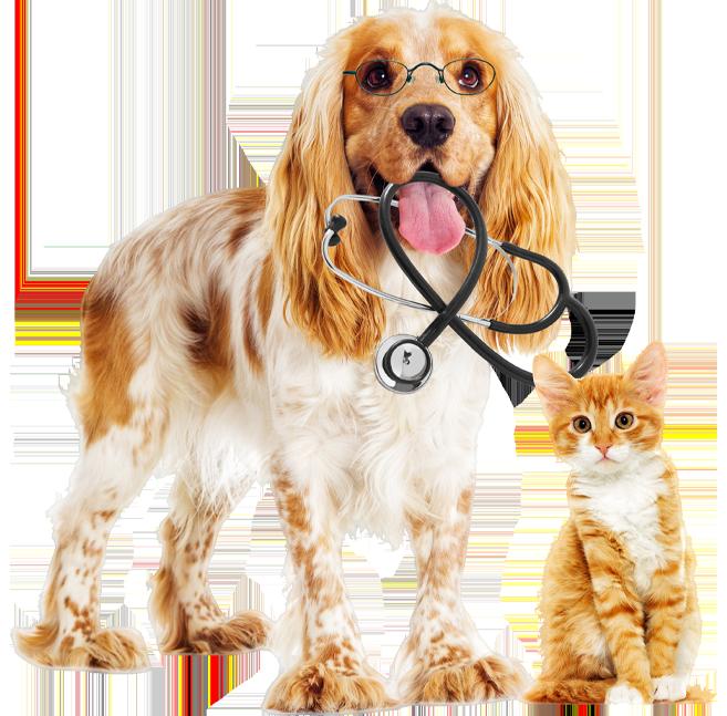 Není na světě lepšího psychiatra, než je štěně olizující vám obličej. Pes je jediné stvoření na světě, které vás miluje víc než sebe. – Josh Billings